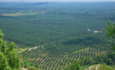 Averting palm oil devastation in Latin America featured image