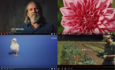 10 green viral videos you should watch now featured image