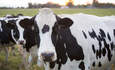 The future of dairy sustainability: Communications, partnerships and progress featured image