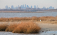 How coastal cities can learn resilience tactics from nature featured image