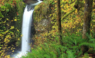 Safeguarding Water Supplies Starts by Protecting Forests featured image