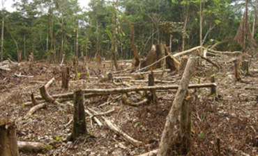 The Challenges -- and Future -- of REDD featured image