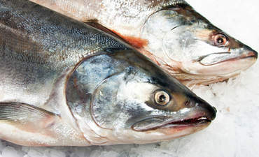 Verlasso works to tackle sustainable salmon farming  featured image