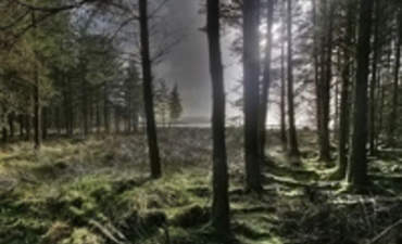 Getting Back to Our Roots: The Renewed Interest in Forestry Carbon Offsets featured image