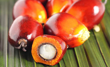 Primatologist, industrialist and entrepreneur fight Big Palm Oil  featured image