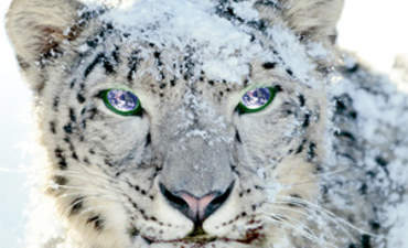 Blogger: Upgrade to Snow Leopard, Help Green the Planet featured image