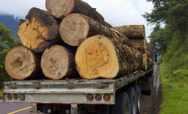 Why we need to level the playing field for legal timber in Brazil featured image