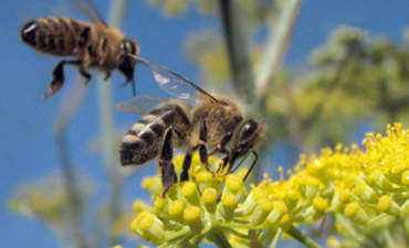 Sainsbury's to Enhance Eco-Store Experience with Swarms of Bees featured image