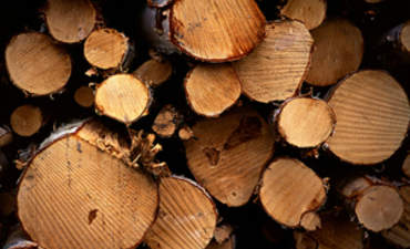 U.S. Law on Illegal Timber and Paper Bares its Teeth featured image