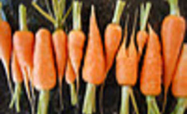Driving Change in Energy Efficiency: A Carrot or a Stick? featured image