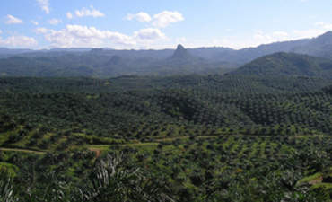 Walmart and General Mills Bullish on Sustainable Palm Oil featured image