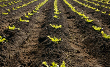 Why Green Alternatives for the Food Industry are a Win-Win featured image