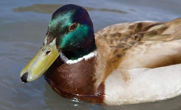 Renewable energy's bird problem featured image