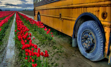 3 Reasons Why You Should 'Lose the Bus' to Win on Sustainability featured image