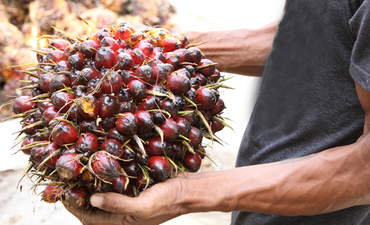 Guide helps shift palm oil production to degraded land featured image