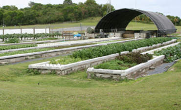 Will Aquaponics and Other Urban Farms Yield a Green Job Harvest? featured image