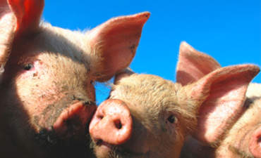 Soggy Pork ... and Other Climate Change Choices featured image