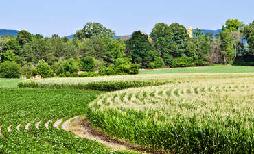 ICYMI: Hectares of sustainable food news, ESG pro profiles & more featured image