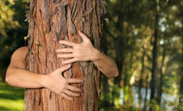 The evolution of the tree hugger featured image
