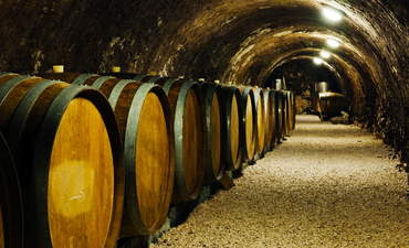 How a polluted winery became a model of sustainable practices featured image