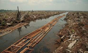 Asia Pulp & Paper commits to end Indonesian rainforest destruction featured image