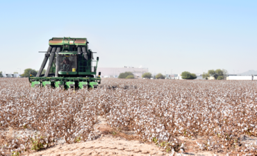 A John Deere cotton harvester harvesting cotton in Goodyear, Arizona