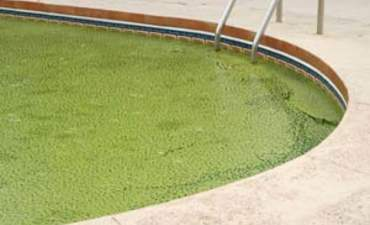 Will algae become a growth business? featured image
