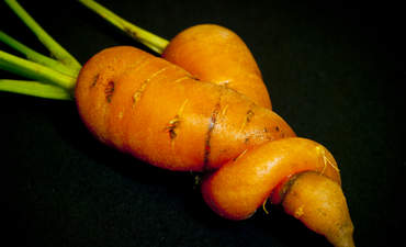 A mutant looking carrot