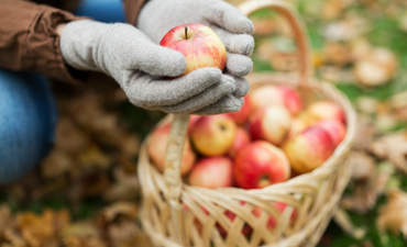 How U.S. farmers are saving apple pie featured image