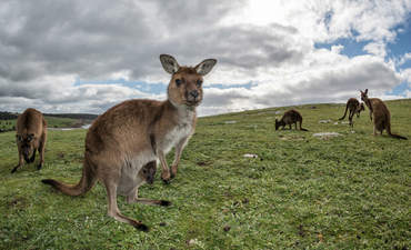 A group of companies in South Australia, home to kangaroos, vineyards and high electricity prices, hope to cut costs and use more clean energy by trading power on a blockchain platform.