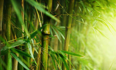 bamboo sustainable alternative timber