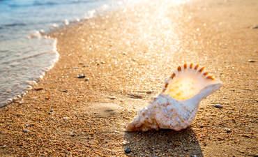 seashell on a beach