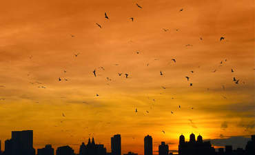 Wildlife in the city: Urban biodiversity takes flight featured image
