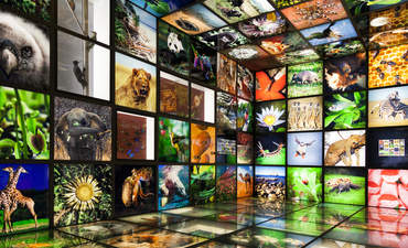 biodiversity and commercialism