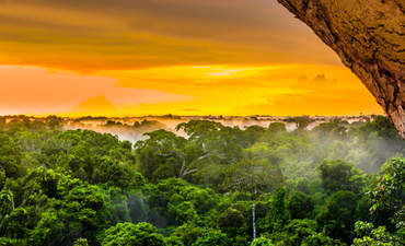 3 ways public-private partnerships can save Brazil's forests featured image