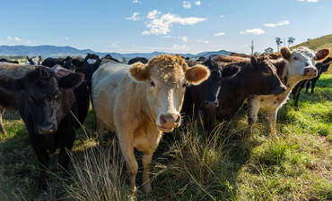 How far will Chipotle go to source grass-fed organic beef? featured image
