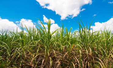 cellulosic ethanol green fuel production difficulty
