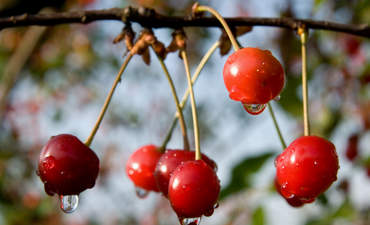 The low-hanging fruit for climate protection is rotting  featured image