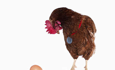 Sustainability and financial performance: The chicken-egg dilemma  featured image