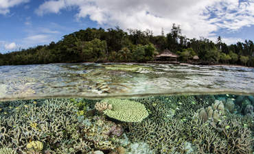 Degraded reefs provide new hope for ocean conservation featured image
