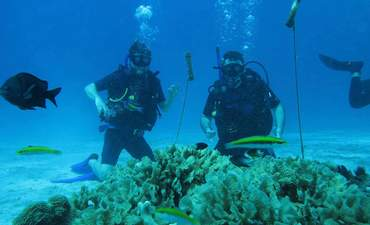 How startup Coral Vita is making a business case for restoring reefs featured image