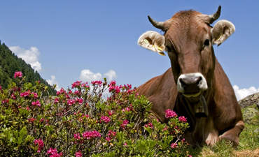 Why renewable methane fuel smells like a rose featured image