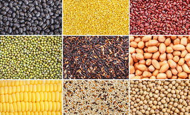 9 types of seeds