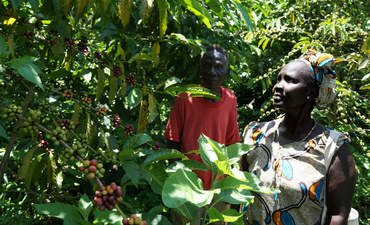 How Nespresso gambled on reviving coffee in South Sudan featured image