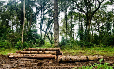 A sustainability journey through the Amazon rainforest featured image