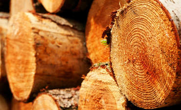 How's your paper trail for logs? Why you can't ignore the Lacey Act featured image