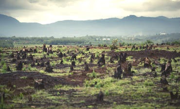 Johnson & Johnson, L'Oreal step up on deforestation featured image