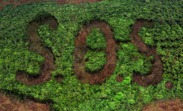 Most major companies failing to report on deforestation risks featured image