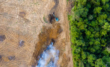 Birds eye view of tropical rainforest deforestation