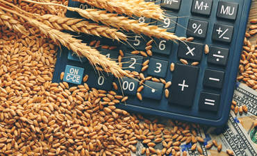 Blades of wheat over a calculator and cash